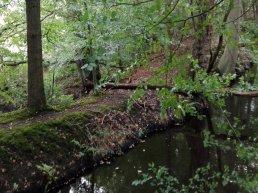 Natuurwandeling omgeving Leuvenum