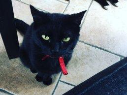Vermiste en gevonden huisdieren in Ermelo