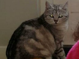 Vermiste en gevonden huisdieren in Ermelo week 29