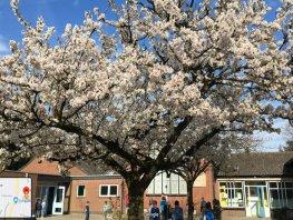 Schoolkinderen helpen gemeente met verkeersveiligere Beemdweg