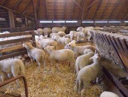 Knuffeldierendag bij schaapskooi Ermelo