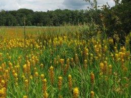 Bijzondere plantenwandeling op landgoed Staverden