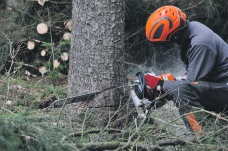 Bomenkap door droogte in de gemeente Ermelo