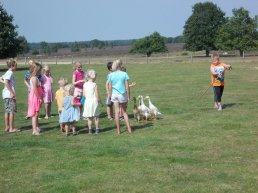Loopeenden drijven bij schaapskooi Ermelo, kinderen mogen helpen