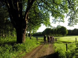 Wandeling op zoek naar wild in Leuvenum