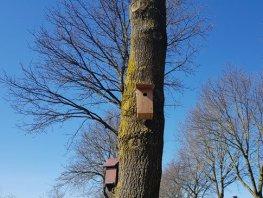 Gratis nestkastjes voor bestrijding eikenprocessierups