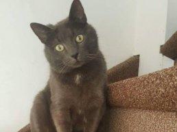 Vermiste huisdieren in Ermelo week 18