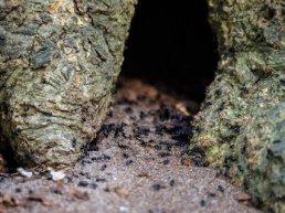 Kinderactiviteit: Kleine dieren in het bos