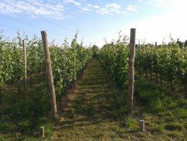 Open Dag bij Wijngaard Telgt in Ermelo en 3 seizoenen tuinen route